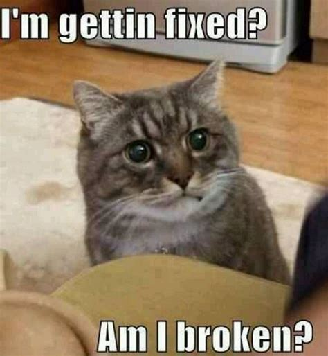 Cat Meme Pictures - am i broken funny cat meme