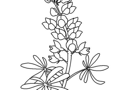 bluebonnet flower coloring pagekids coloring pages