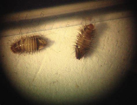 woher kommen silberfische in der wohnung ungeziefer in der wohnung hilfe larven