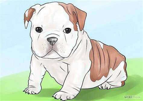 bulldog puppy care 1000 ideas about bulldog puppies on bulldog puppies baby