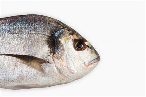pesce testa di vicino testa di pesce scaricare foto gratis