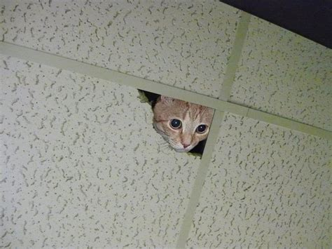 Cat Stares At Ceiling by With Animation Rigger Michor Lu