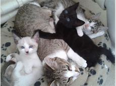KITTENS FOR SALE | Plymouth, Devon | Pets4Homes Kittens For Sale