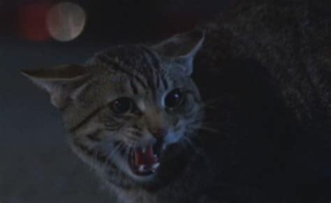 Cats Eye 1985 Cat S Eye 1985 Cinema Cats