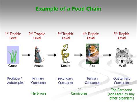 monkey food chain diagram capuchin monkey food web related keywords suggestions