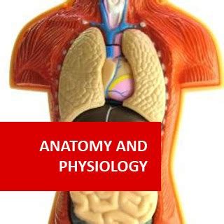 anatomy and physiology from science to life ebook anatomy and physiology human biology ia pre medical