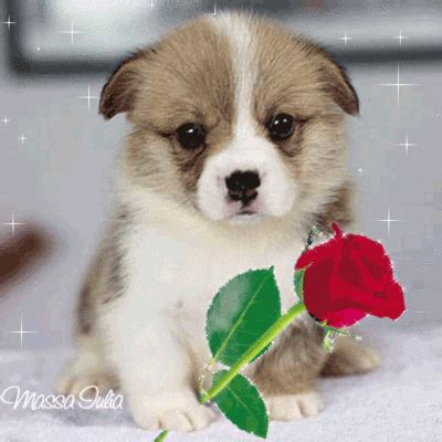 flores encontradas en la web | gif | pinterest | gifs, dog