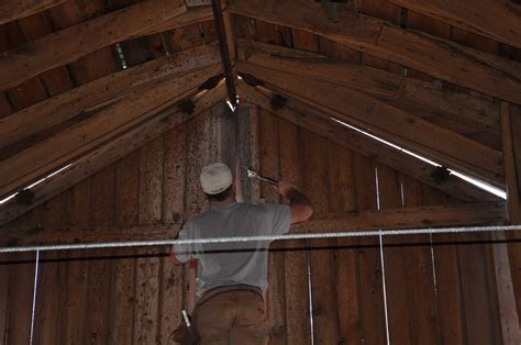 how to get rid of bats in basement how to get rid of bats
