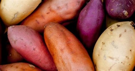 cara membuat empek empek ubi rambat cara menanam ubi jalar lengkap dan benar