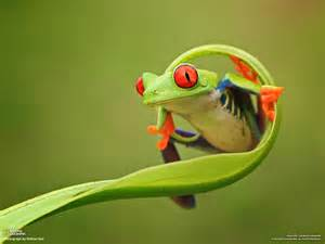 colorful frog picture of the day this frog is fabulous 171 twistedsifter