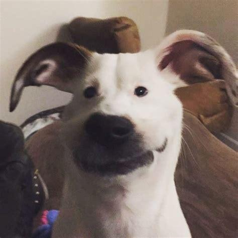 snapchat filters   dog meme guy