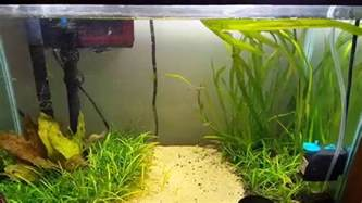 how to lower nitrates in your aquarium youtube