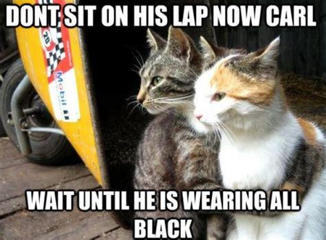 Cat Memes 2018 - 15 top feb 2018 hilarious cat memes quoteshumor com