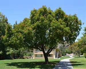 a tree ufei selectree a tree selection guide