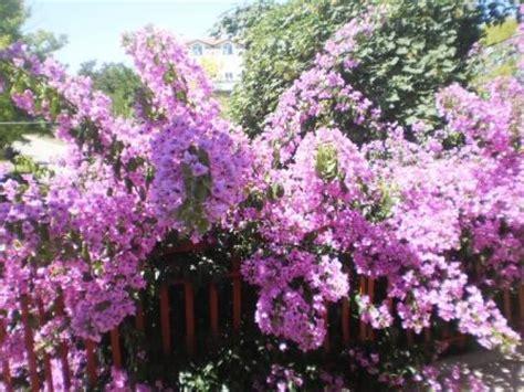 piante da veranda piante balcone sole piante terrazzo sud da come scegliere le