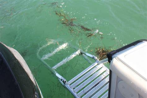 boston whaler boat ladder boat rentals in marathon florida keys marathon fl