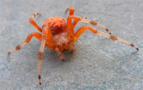 pumpkin spider pumpkin spider what s that bug