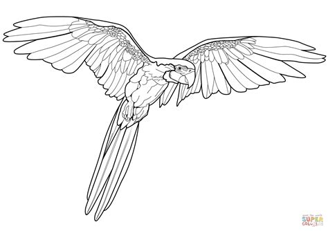 Flying Macaw Coloring Page Free Printable Coloring Pages Macaw Coloring Page