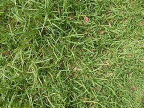 grass types that thrive in granbury tx lawns lawnstarter