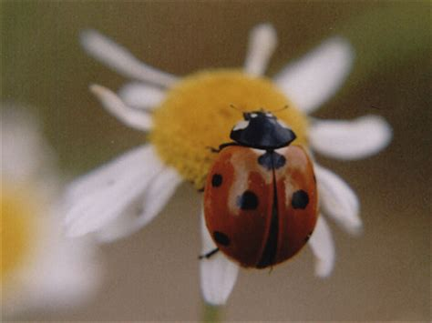 coleotteri volanti dalle punture di zanzara al miele delle api le