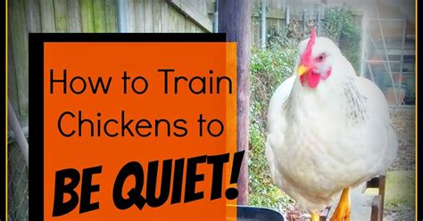quiet chickens for backyards greneaux gardens how to train chickens to be quiet