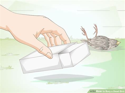 how to bury a dead bird 9 steps with pictures wikihow