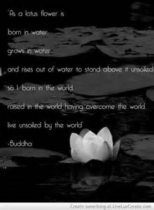 lotus buddha quotes quotesgram