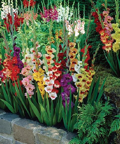 Bulb Garden Ideas Fabulous Bulb Garden Designs And Decors 50 Pictures Awesome Indoor Outdoor