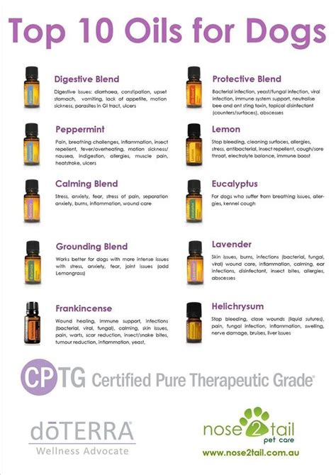 top oils  dogs dottera pinterest oil dog