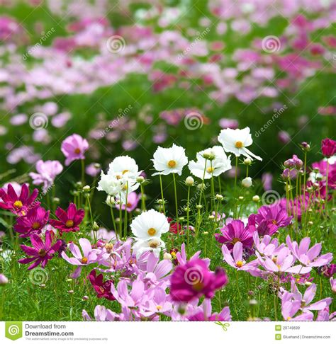 summer flower garden summer flower garden royalty free stock images image
