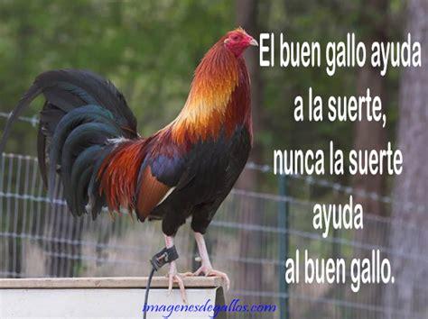 imagenes gratis de gallos con frases imagenes de gallos con frases y dichos de galleros