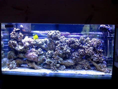 marine aquascaping techniques marine aquascaping techniques 28 images reef aquarium maintenance tips youtube