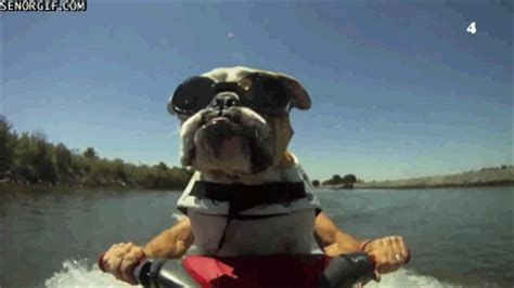 dog winning gif find & share on giphy