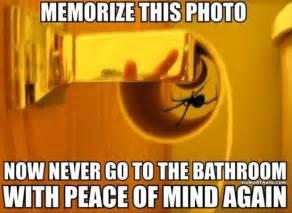 spider in bathroom dump a day
