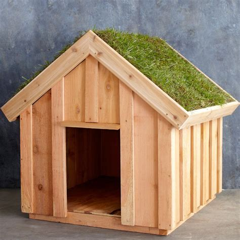 how to roof a dog house living roof dog house so that s cool