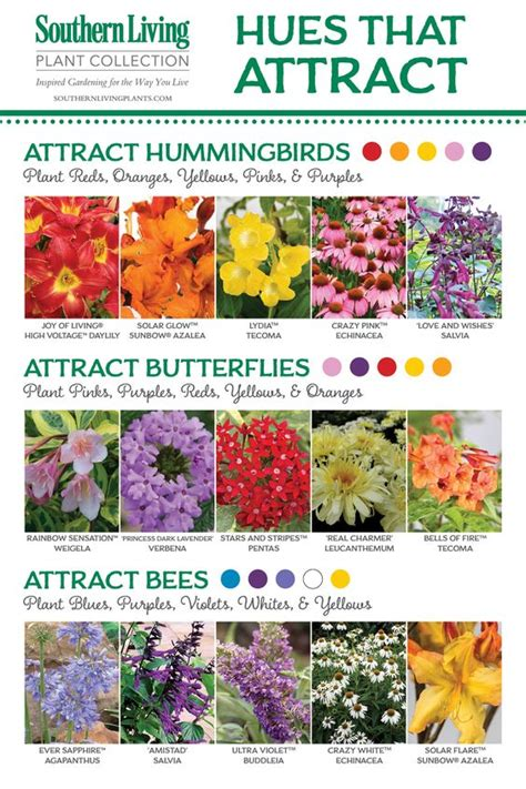 what colors attract butterflies birds bees and butterflies oh my attracting pollinators