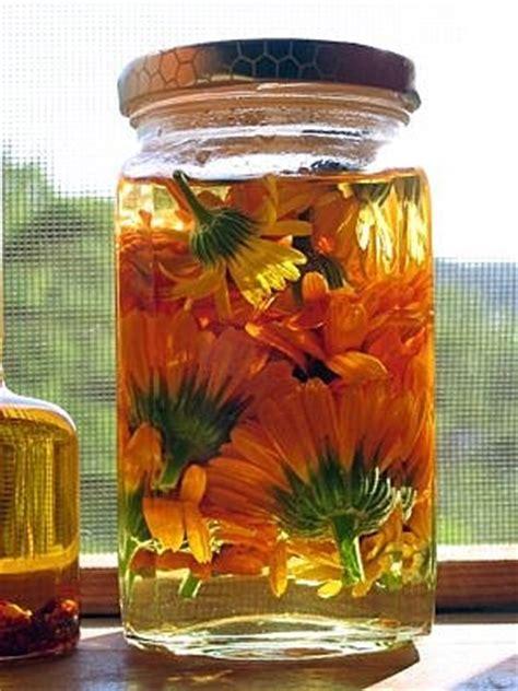 fiori di calendula mondo olistico oleolito di calendula