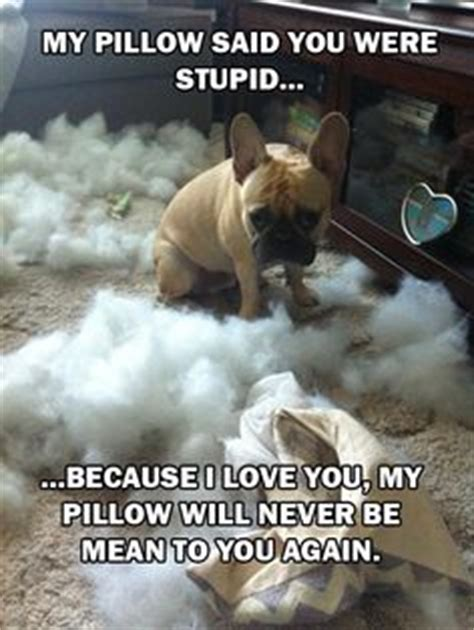 Pillow To Post Meaning by Your Pet Your September 2016
