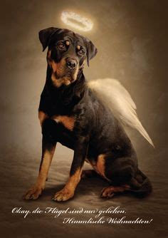 rottweiler dogs  quotes quotesgram
