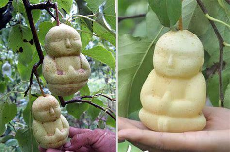Ginseng Termahal buah buahan yang termahal di dunia peristiwa dunia