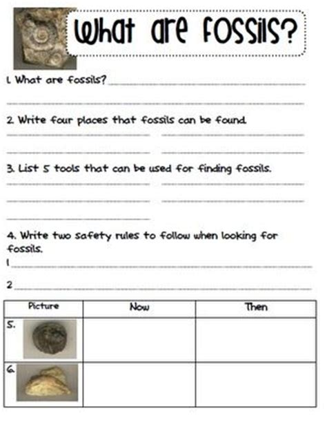 Fossil Worksheets by Fossils Freebie Fossils And Evolution Planning