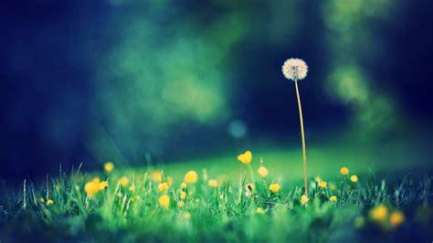 fiori di bach efficacia ansia e fiori di bach i rimedi ansiolitici 2a parte