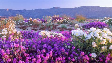 art in nature portraits from the desert anza borrego 自然景色高清大图桌面壁纸 桌面壁纸下载 四季壁纸