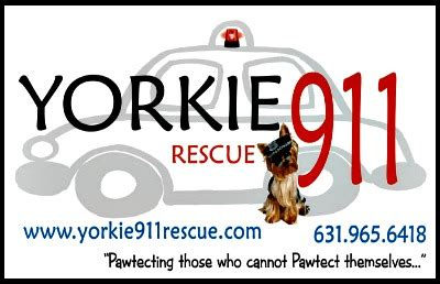 yorkie 911 rescue all about yorkies