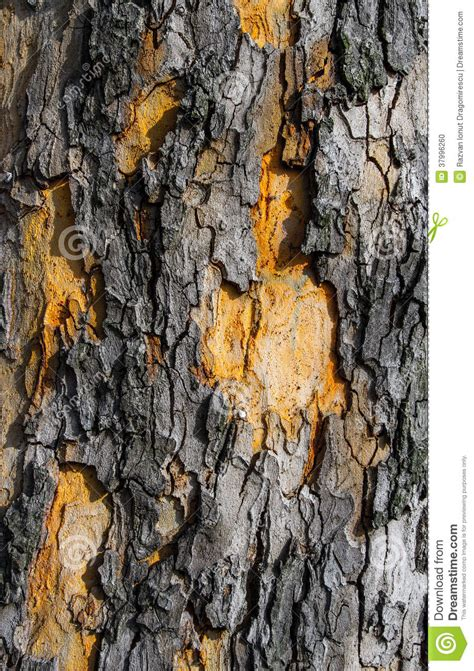 skin the color of bark bark texture detail stock photo image 37996260