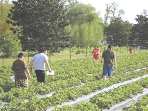 Coastal Farm And Garden by Finger Pickin Cuisine Feature News