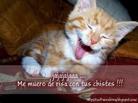 imagenes chistosas gatos im 225 genes de gatos con frases chistosas im 225 genes y frases