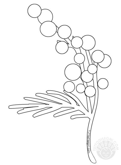 rami di fiori da colorare ramo di mimosa da colorare tuttodisegni