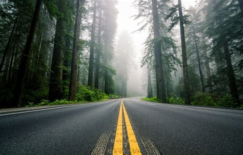 wallpaper road forest trees nature fog markup