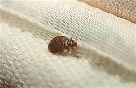 Do Bed Bugs Die With by Does Kill Bed Bugs Find Out If It Really Works